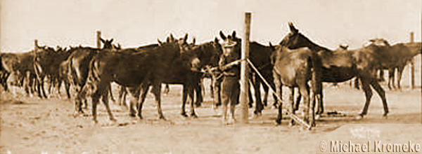 ArmyMulesDemingNewMexico1918